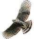 falconj